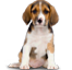 Pet Urine Odor Cleaning Icon